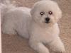 ollie-groomed