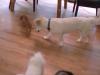 snapshot-deb-smith-dogs